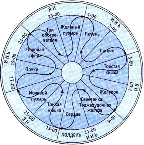 Время активности меридианов