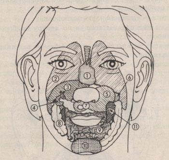 Проекция внутренних органов на лице