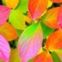 Осень, сезонность