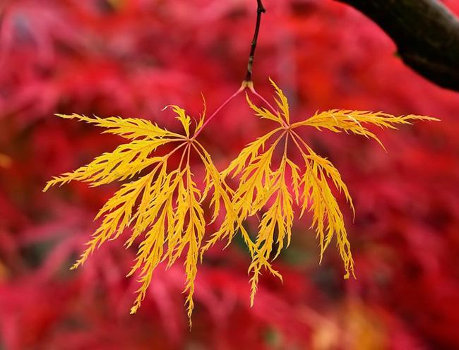 Осень, сезонность, китайская медицина