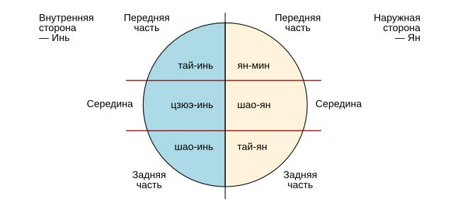 Теория инь-ян в медицине