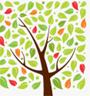Зизифуса китайского плод (Ююбы плод)
